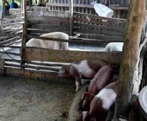 村庄猪圈改民宿 吃瓜群众:看到暂时还没有人表达承租意向感觉还好