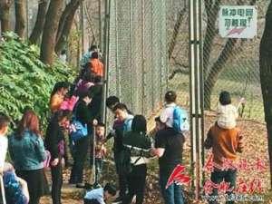 游客无视电网观虎 吃瓜群众:老虎是动物园的,生命安全是自己的