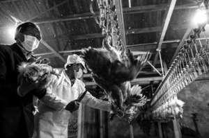 北京确认今年首例H7N9禽流感病例 感染者仍在治疗