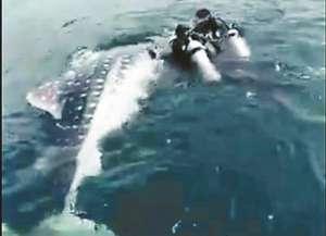 晒捕鲸鲨视频被查 聊天记录曝光-抓到都是钱不是几千几万是几十万