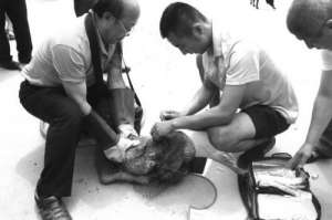 青岛茶农被流浪狗舔了手 患狂犬病不治身亡