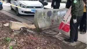 3米蟒蛇现身街头 网友-难道大蛇以为夏天来了提前结束冬眠