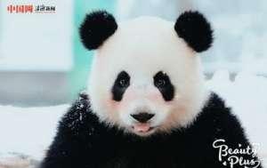 动物遇上美颜相机 最萌版猛兽出炉可爱无比暖化人心