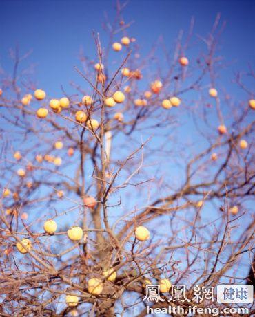 柿子丰收农妇把柿子当饭吃 鹅蛋大结石撑破直肠