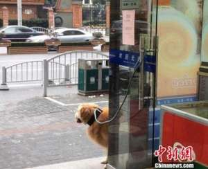 多地出台养犬规定 如何实施才能避免成为一纸空文?