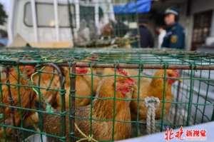 北京第二例h7n9 目前该患者病情较重日常生活我们要如何防范