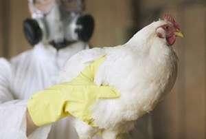 H7N9疫情高发季节 多地活禽市场陆续关闭