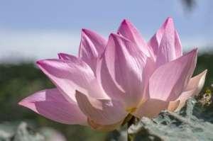 气质爆表冰穿粉色连体装长腿逆天