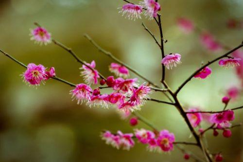孙怡越来越会穿了一身粉色连衣裙温柔又大气